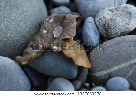 Stock Photo close up stones dry leaf water drop