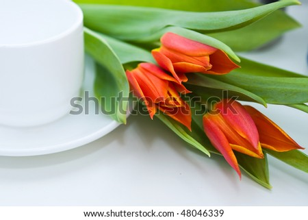 close up tender tulips