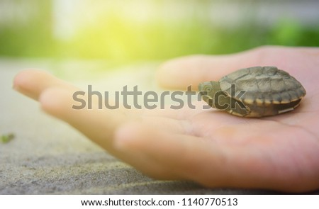 Close-up Terrapin on hand background. - Shutterstock ID 1140770513