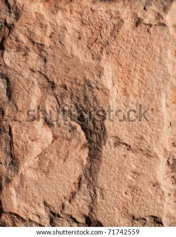 Close-up texture