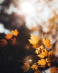 Close Up Texture and Pattern of a Fall Leaf in an Autumn Forest during the Golden Hour