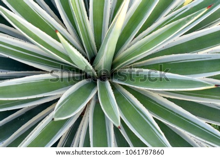 Close up the center of white and green succulent foliage plant botanical pattern leave natural