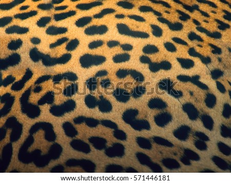 close up tiger skin texture  #571446181