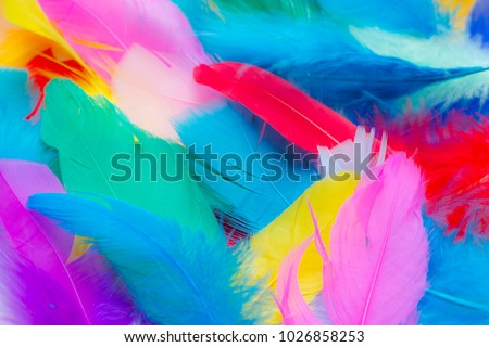 Close up to bright colorful feathers background Сток-фото ©