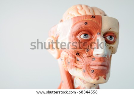 close up to face anantomy
