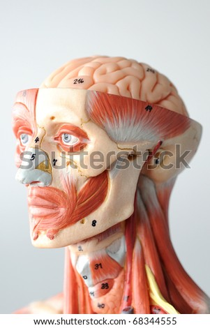 close up to face anatomy