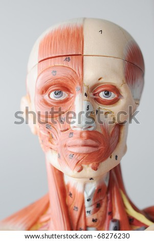 close up to face human anantomy