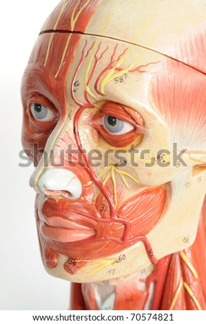 close up to face human model