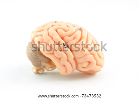 close up to human brain anatomy