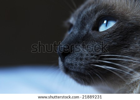 cat eyes close up. stock photo : Close up to
