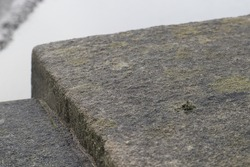close up to trees and moss growing on stones as well as some rock textures, cracks, greenery, cobblestone, river
