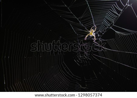 Close up top of spider arachnid on spider web cob web at night with black background  #1298057374