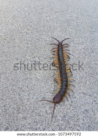 Close up top view centipede on the floor #1073497592
