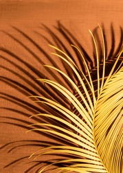 Close-up Tropical Palm Branch on the Fortuna Gold wooden background with light and shadow.