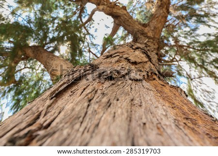 Close up trunk of pine Tree, bark texture #285319703