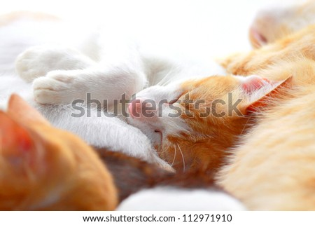 Close up two color cat sleeping peacefully