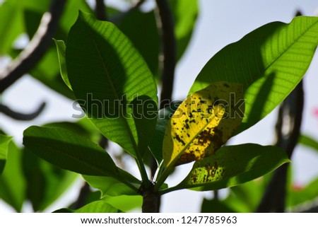 close up under green leaves and yellow leaf with light and shadow on their surface areas.