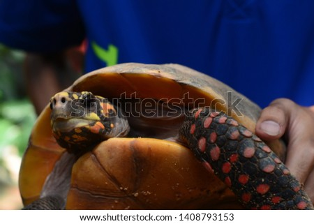 Close up upper body of freshwater turtle. Freshwater turtles are reptiles with hard shells that protect them from predators. #1408793153