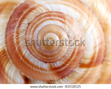 Close up vie of a spiral shell texture