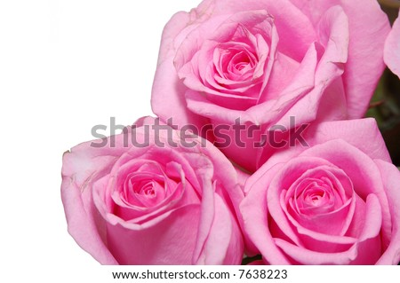 close up view a pink roses in bouquet