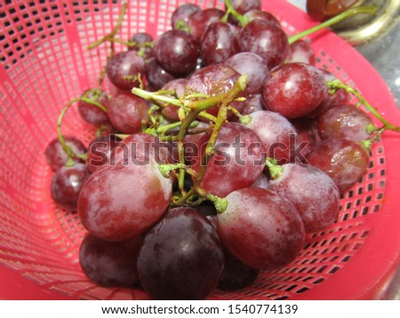 Close up view from top side of red purple grapes with stick stalk stem brown green leaves, stack heap pile one single on basket for sell. Round circle shape shiny. Eat fruit healthy sweet sour taste