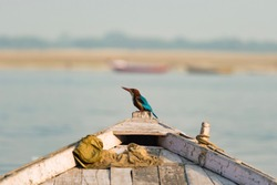 Close up view of a beautiful and colored kingfisher bird with his bright plumage and long bill is standing on a bow of a wooden little boat. Blurred river Ganga in the background. Varanasi, India.