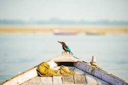 Close-up view of a beautiful tropical Kingfisher bird with brightly colored plumage on a wooden boat in Varanasi, India.