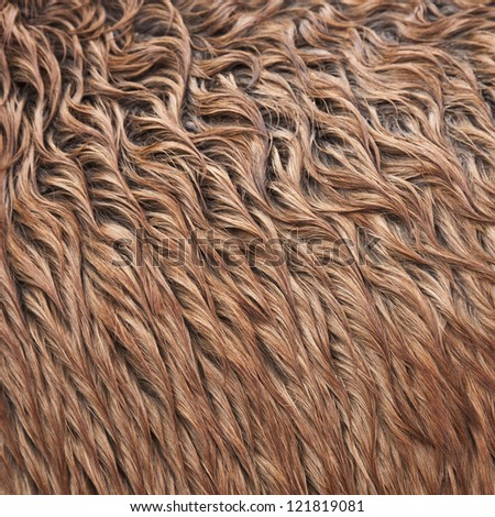 Close up view of a brown wild horse fur