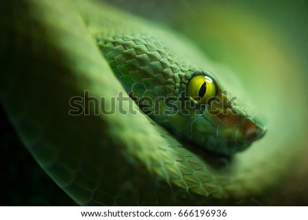 Close up view of a dangerous green mamba snake #666196936