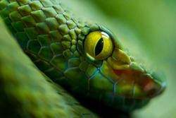 Close up view of a dangerous green snake