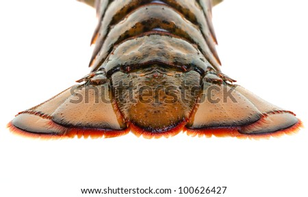Close up view of a live lobster tail isolated on a white background