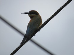 Close up view of a single bird sitting on a electric wire.