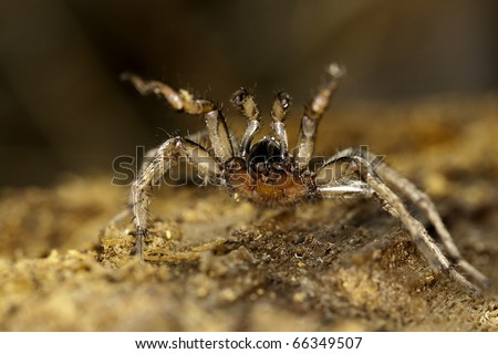 Close up view of a spider on a decaying wooden tree on the forest.