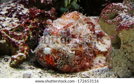 Close-up view of a Stonefish 02