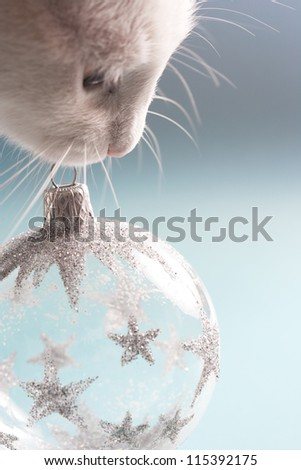 Close up view of a white cat holding a Christmas tree bar-ball ornament in it\'s mouth against a blue background.