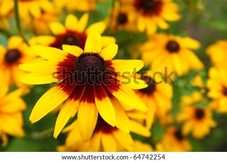 Close up view of a yellow cone flower