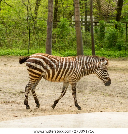 close up view of a zebra animal on a zoo
