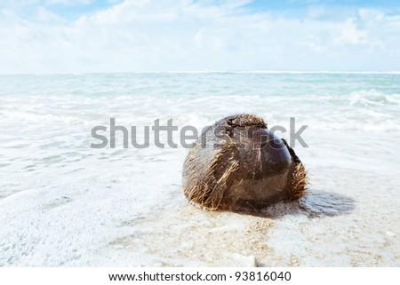 close up view of big coconut  splashed on the beach