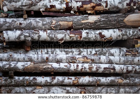 close up view of birch logs