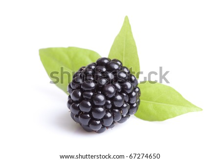 Close-up view of blackberries on a white background - stock photo