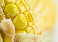 Close up view of corn seeds