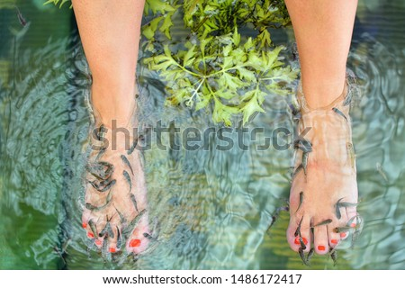 Close up view of fish and woman feets in water. Pedicure fish spa treatment. Red garra or Garra Rufa fish eats skin. Foot Spa. Woman receiving massage with small fishes. Selective focus.