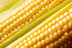 Close up view of fresh corn cobs