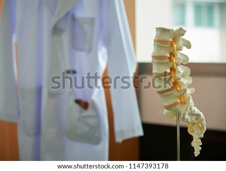 Close-up view of human lumbar spine model on the table in medical office. Stethoscope and reflex hammer in labcoat on background