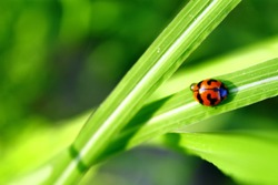 Close up view of ladybug on grass