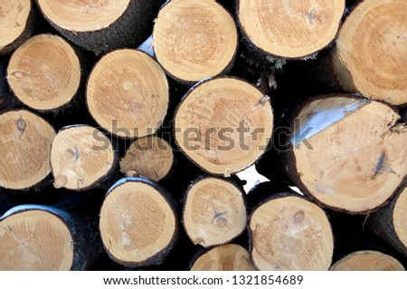 Close-up View of Large Cords of Wood from Deforestation of Beautiful Evergreens During the Winter Season Horizontal #1321854689