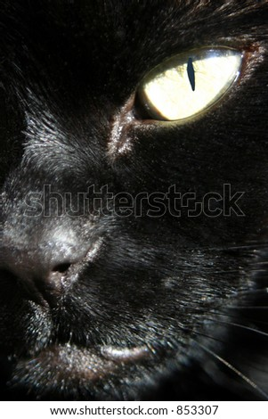 Close up view of my Cat (Zombie). Included a clipping path for the eye, so you can easily change the colour of the eye. This is actually the real colour.