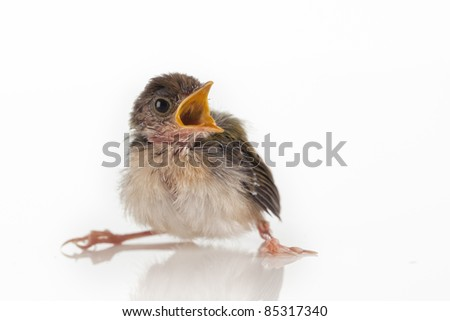 Close up view of nice little bird on white back - stock photo