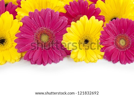 Close up view of  pink and yellow daisies against  white background