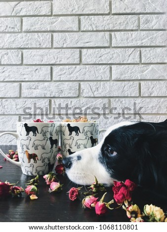 Stock Photo close up view of puppy lying on tabletop with cups and flowers